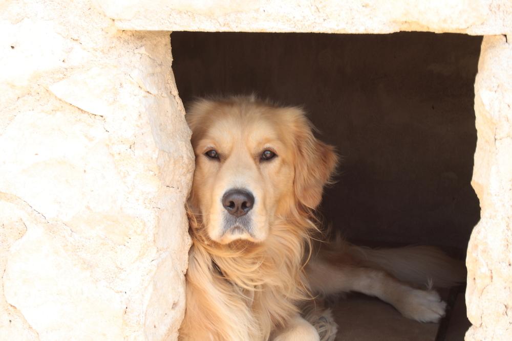 hunde til adoption sjælland